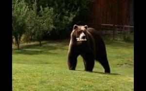 bart the bear 3