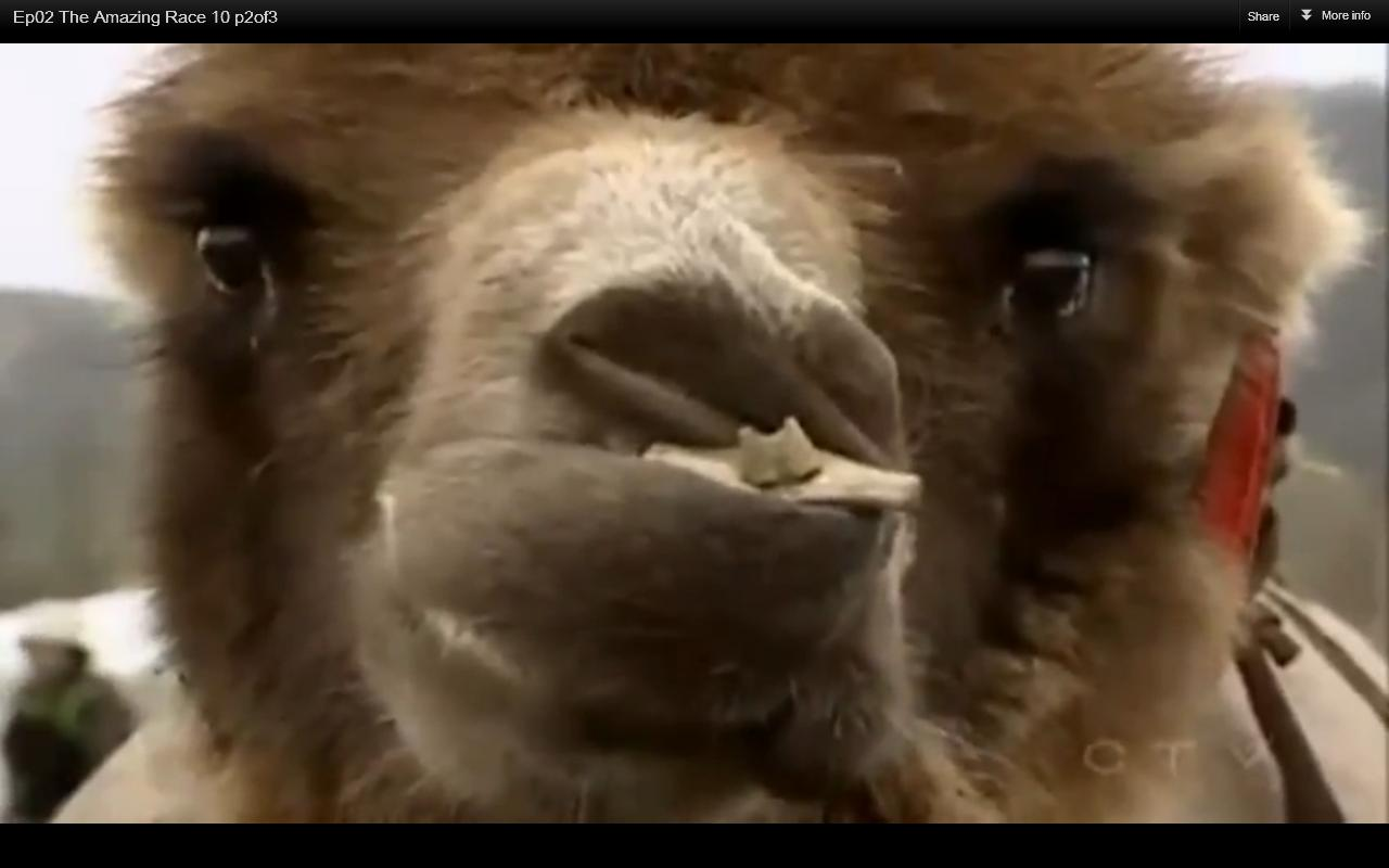 Tar 10 episode 2 ranking thesupacoowackiestblogintheuniverses blog tar loves their close ups of camels whats with the teeth though publicscrutiny Image collections