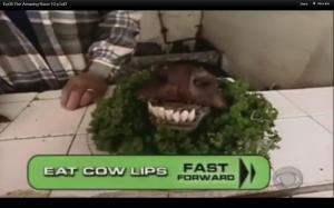 cow lips 2
