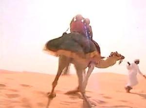 camel guide