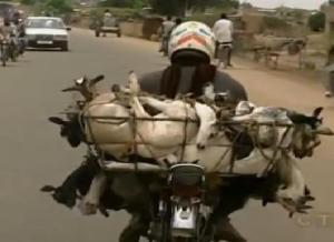 goat motorbike