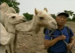 ronald camel