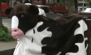 kazakhstan cow 2
