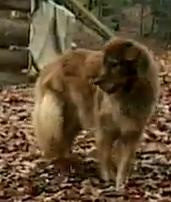 switzerland dog