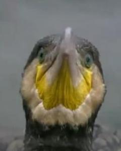 guilin bird 4