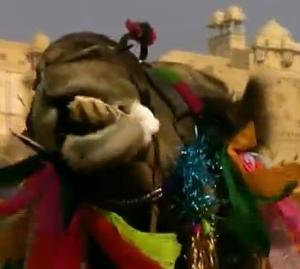 india camel 3
