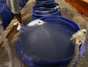 phuket barrel