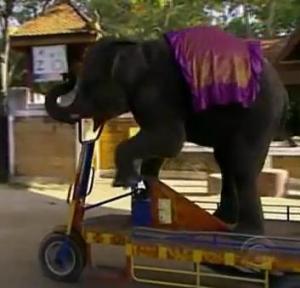 phuket elephant bike
