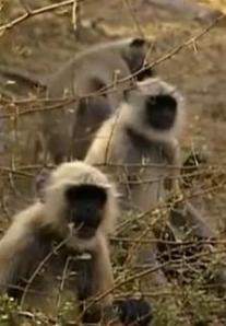 phuket monkey 2