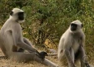 phuket monkey 3