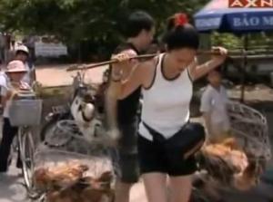 vietnam chickens 2