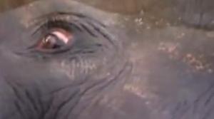 india elephant 2