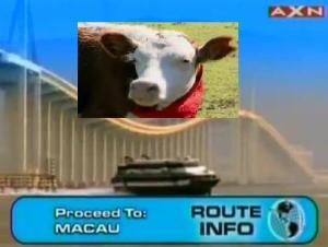 macau cow