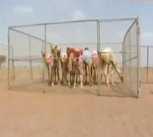 finish camel