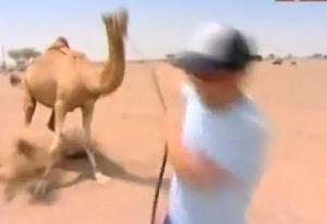 finish sam camel 2