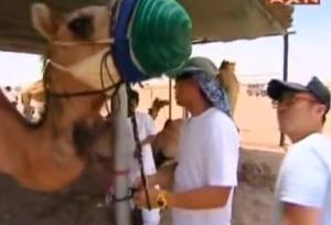 finish sam camel 7