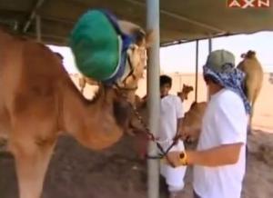 finish sam camel 9