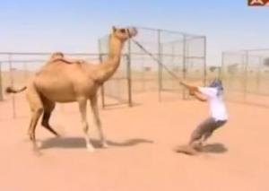 finish vince camel 2