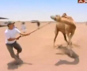 finish vince camel