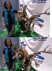 emirates reindeer