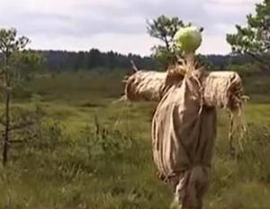 estonia cabbage 3