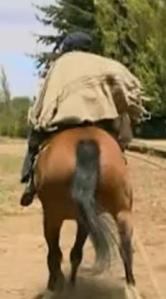 san carlos de bariloche horse 4