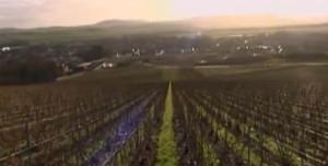 reims vineyard