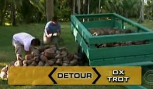 seychelles coconuts