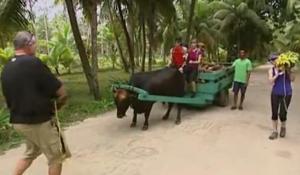 seychelles ox 2