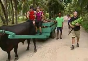 seychelles ox