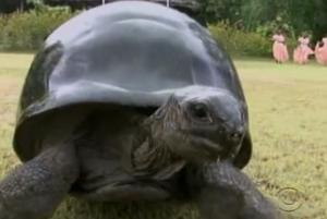 seychelles tortoise 10