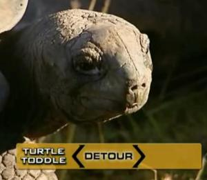 seychelles tortoise 2