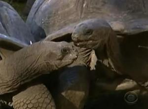seychelles tortoise 3