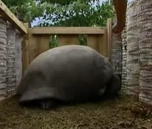 seychelles tortoise 5
