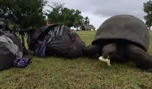 seychelles tortoise 7