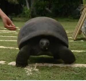 seychelles tortoise 8