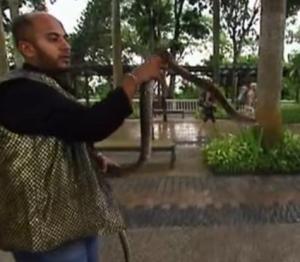 singapore snake