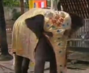 sri lanka elephant