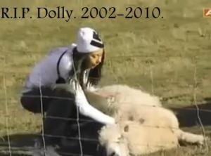 sydney sheep 2