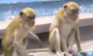 wumories monkey