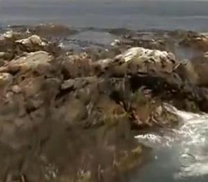gloucester ocean