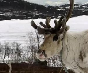 sweden animal