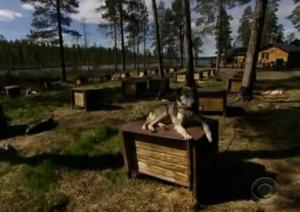 sweden dogs 4
