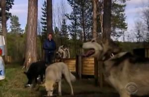 sweden dogs 6