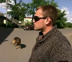 st petersburg dog