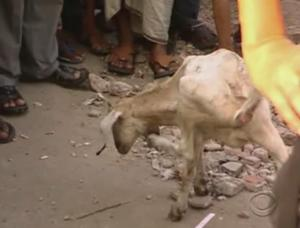 dhaka goat