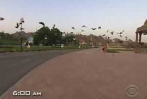 oman birds