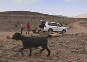 oman goat 8