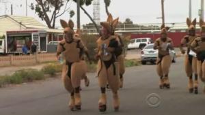 outback kangaroos 3