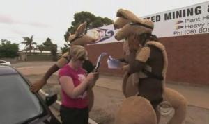 outback kangaroos